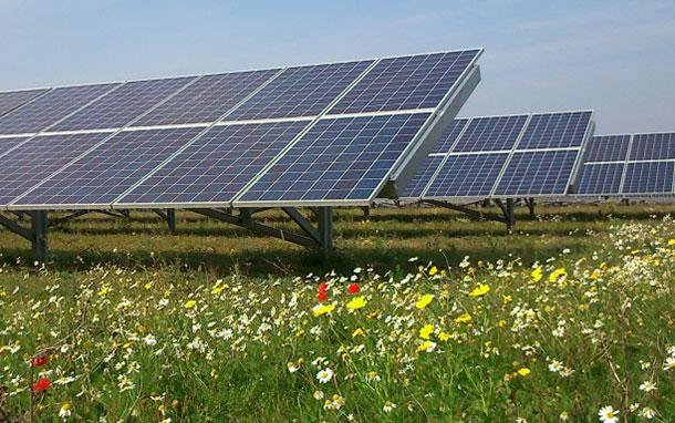 solar-farm-flowers